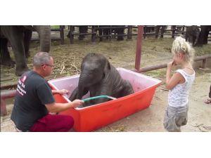 Yavru Filin İlk Banyo Macerası