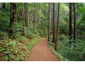 Bugün Dünya Ormancılık Günü