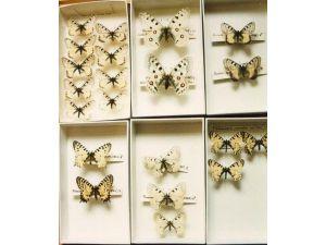 Bakanlık 54 Böcek Tespit Etti