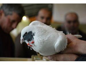 Güvercinlere Güzellik Yarışması
