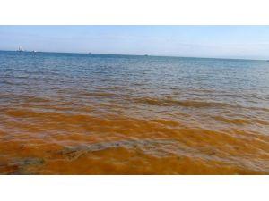 Kıyı Şeridi Kızıla Boyandı !