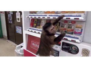 İçeceğini Otomattan Kendi Alıyor