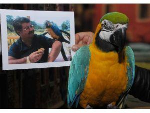 Özal'ın Papağanı 40 Yaşında