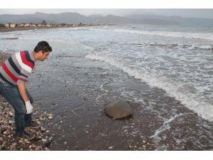 Deniz Kaplumbağası Operasyonla Denize Bırakıldı