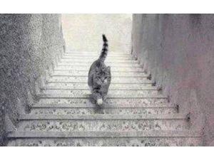 Elbiseden Sonra Şimdi De Bu Kedi ! Sosyal Medyayı İkiye Böldü