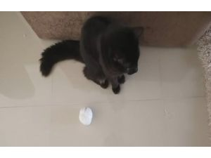 Bu Da Taffarelin Kedi Versiyonu