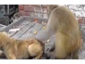 Maymunluğun Bu Kadarı...