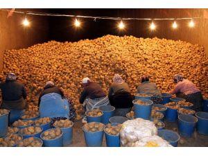 Patates Sıkıntısı Yaşanacak Mı ?
