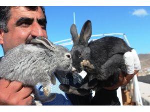 Akdamar Kilisesi'ni Tehdit Eden Tavşanlar Tahliye Ediliyor