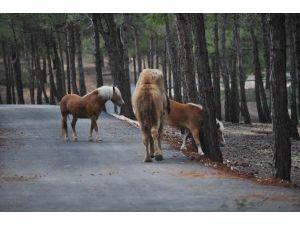 Türkiye'nin İlk Safari Parkı Açılıyor