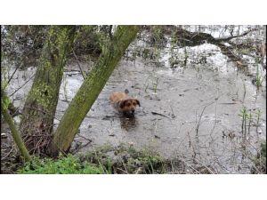 Max Her Gün 5 Kilometre Yüzüyor