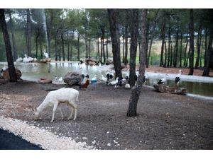 Türkiye'nin İlk Safari Parkı'na Ziyaretçi Rekoru