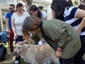 Terapist Köpekler Sınav Kaygısını Ortadan Kaldırıyor