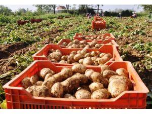 Rekabet Kurumu Patates Fiyatlarına El Attı
