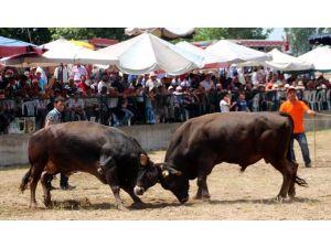 Boğa Güreşi Şenlikleri İspanya'yı Aratmadı