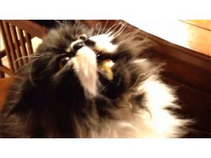 Bu Da Gurme Kedi