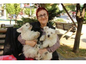 Köpek Sevgisi Evi Terk Ettirdi