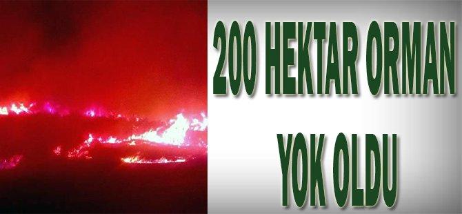 200 hektar orman yok oldu