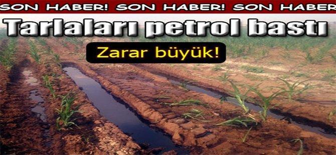 Tarlaları Petrol Bastı, Zarar Büyük!