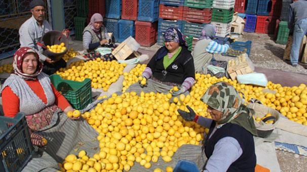 Limon Üreticisi Huzursuz