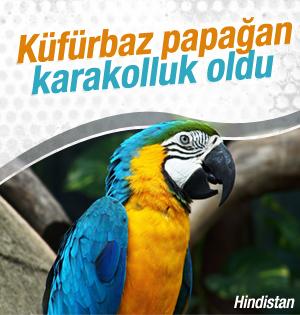 Papağan gözaltına alındı