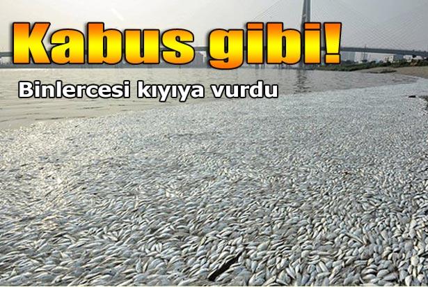 Siyanür: Siyanür Patlaması Sonrası ölü Balıklar