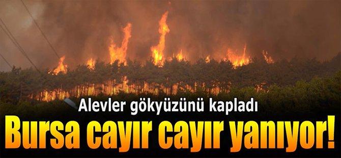 Bursa cayır cayır yanıyor