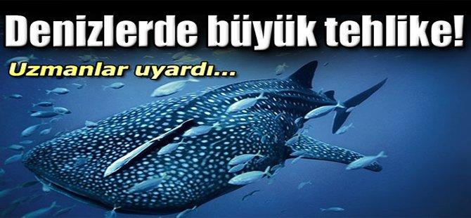 Denizlerde büyük tehlike!