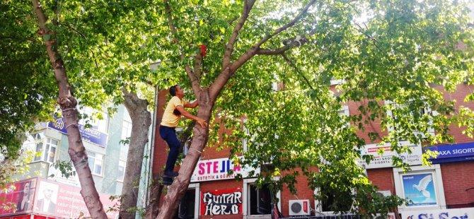 Ağaca çıkan kedi için kurtarma operasyonu