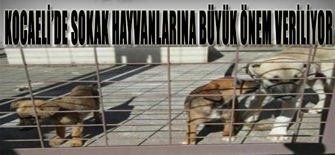 Kocaeli'de Sokak Hayvanlarına Büyük Önem Veriliyor