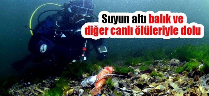 Suyun altı balık ve diğer canlı ölüleriyle dolu