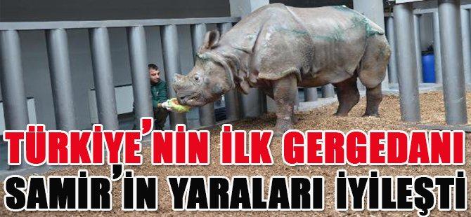 Türkiye'nin İlk Gergedanı Samir'in Yaraları İyileşti
