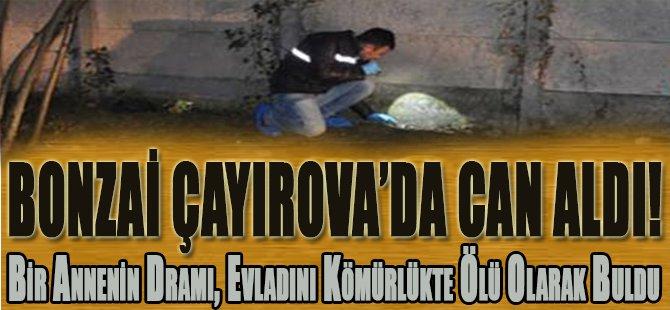 Bonzai Çayırova'da Can Aldı!