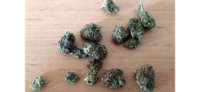 'Yeşil Kokain' Yakalandı