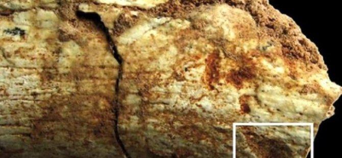 500 Bin Yıllık İnsan İskeleti Bulundu
