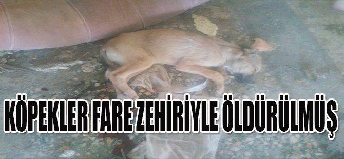 Köpekler Fare Zehiriyle Öldürülmüş