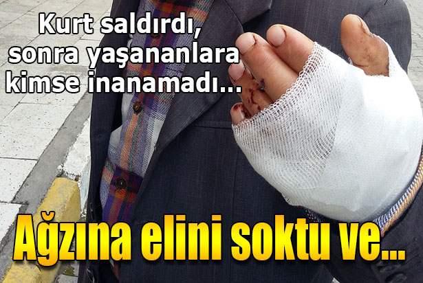 Kurdu bıçakla yaralayıp kurtuldu