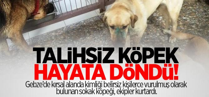 Talihsiz köpek hayata döndü