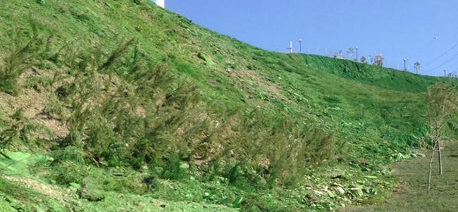 Yeşillendirilmek Yerine Yeşile Boyandı