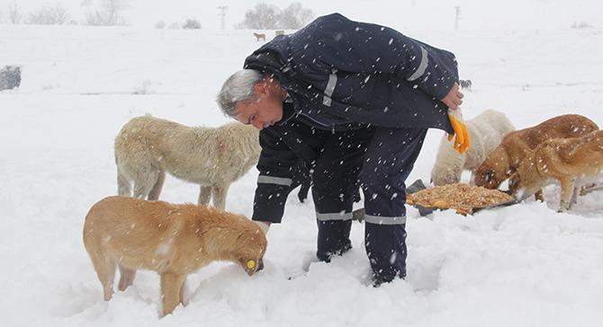 Çayırova Beldiyesi Zorlu Kış Günlerinde Sokak Hayvanlarını da Unutmadı