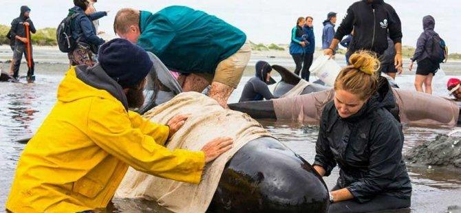 400 balina kıyıya vurdu!