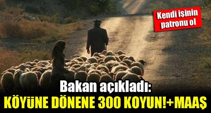 Köyüne dönene devletten 300 koyun ve maaş!