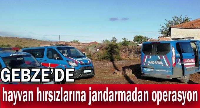 Gebze'de hayvan hırsızlarına jandarmadan operasyon