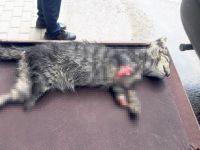 Caniler kedinin dört ayağını kesti