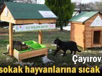 Çayırova'da sokak hayvanlarına sıcak yuva