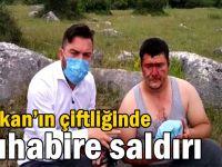 Türkkan'ın çiftliğinde muhabire saldırı