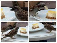 'Kafedeki Davetsiz Misafir' Tıklanma Rekoru Kırıyor