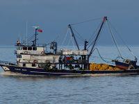 Hava şartları düzeldi, balıkçının yüzü güldü