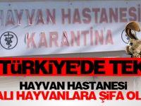 Türkiye'nin Tek Hayvan Hastanesi Yaralı Hayvanlara Şifa Oluyor