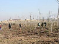 Başiskele Yeniköy Rekreasyon Alanı ağaçlandırılıyor